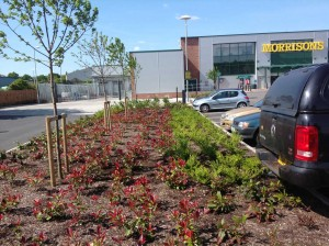Landscaping at Wells Morrisons